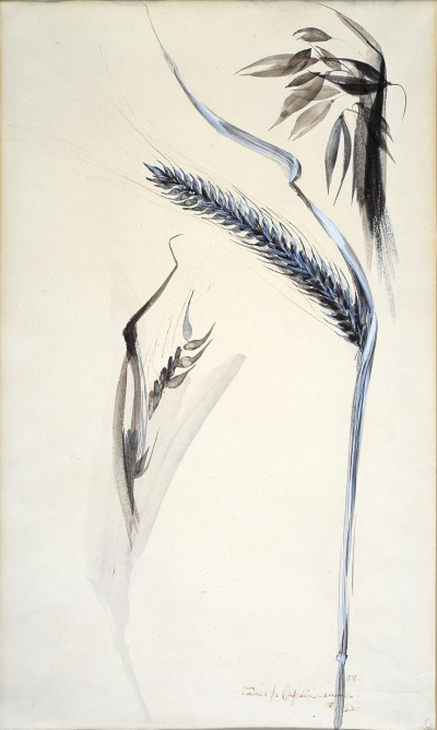 Alan Reynolds, Studies for Painting Oats 11, 1954
